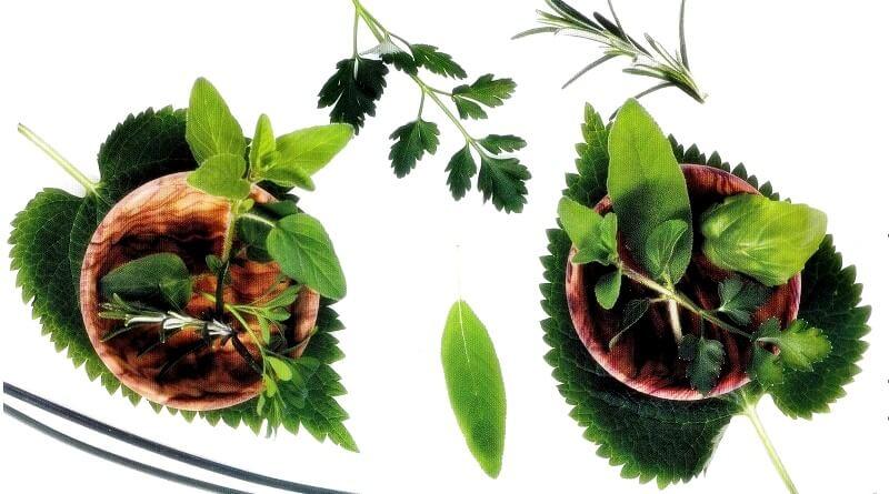 Αρωματικά φυτά και βότανα για γεύση και υγεία