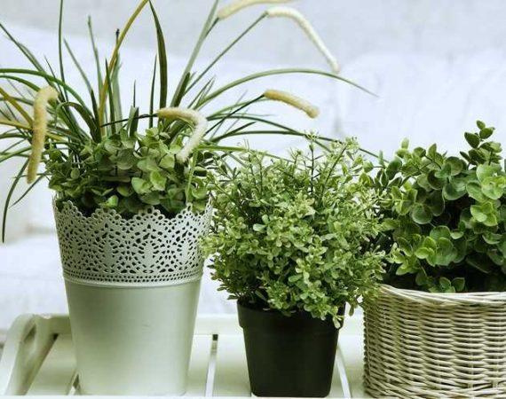 θεραπευτική δύναμη των φυτών