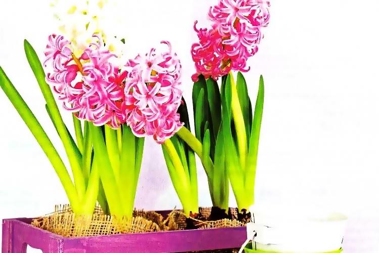Πως να φτιάξεις έναν όμορφο κήπο μέσα στο σπίτι!