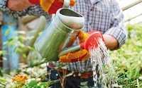 Χόμπι για ψυχοθεραπεία-Κηπουρική