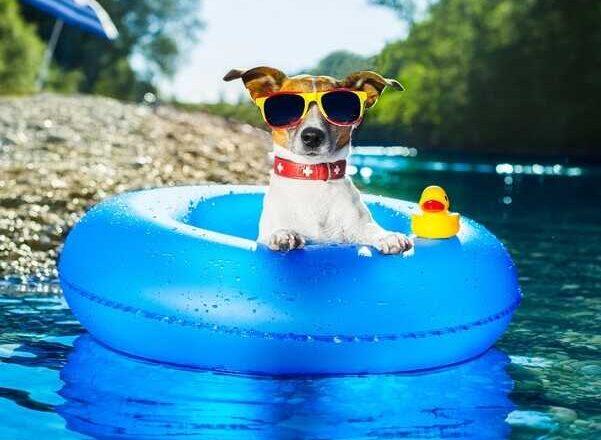 Πως να κρατήσεις το σκύλο σου δροσερό το καλοκαίρι!