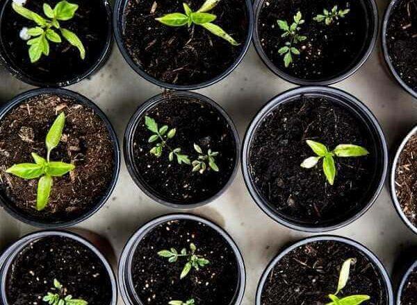Κηπουρική στο μπαλκόνι με μυρωδικά και βότανα!