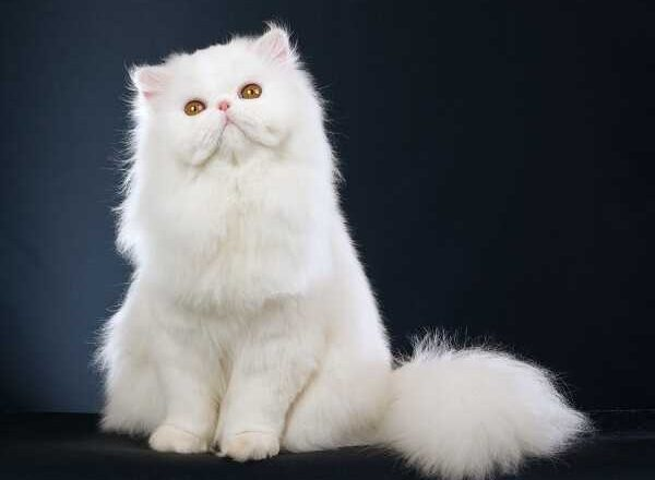 Γιατί να πάρεις γάτα; Μάθε όλους τους λόγους